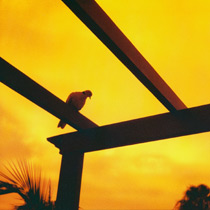 Example photo of Lomography Redscale